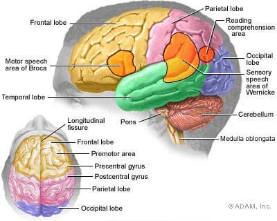 Brain Activity during Alzheimer's Disease